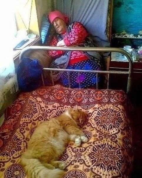 Деревенский интерьер, бабушка, кот
