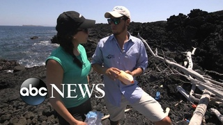 Conservation front and center as tourism booms in the Galapagos Islands I Nightline
