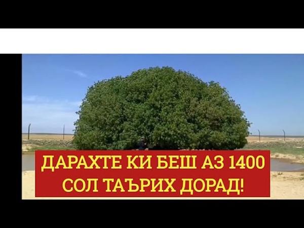 ИН ДАРАХТ ПАЙҒАМБАР (С) РО СОЯБОНИ КАРДА АСТ. درختی که پیامبرص در سایه اش نشسته ب