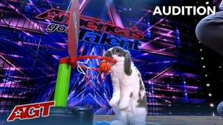 Bini The Bunny: The Most Talented Bunny Rabbit on America's Got Talent?