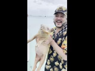 ☼ Свинки, акулы и игуаны на Багамах ☼