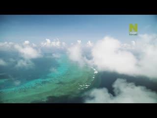 Большой Барьерный риф: Живое сокровище - Чудо жизни   1 серия из 4   2020