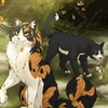 Коты-Воители