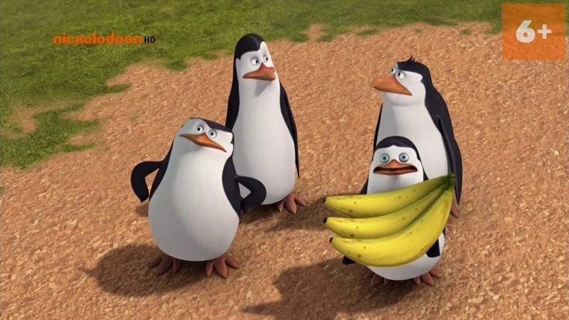 Пингвины из мадагаскара
