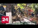 Убившее девочку дерево в Краснодаре мог срубить тент от солнца Россия 24