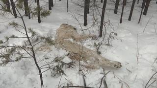 В Улан-Удэ на найденных трупах животных могли ставить эксперименты