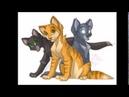 Буктрейлер Коты-воители