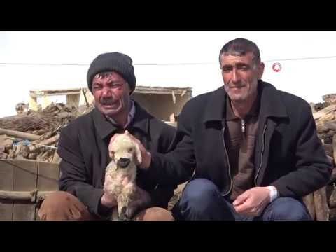 Van'da Yürek Yakan Görüntü Depremde Annesiz Kalan Kuzular İçin Ağladılar