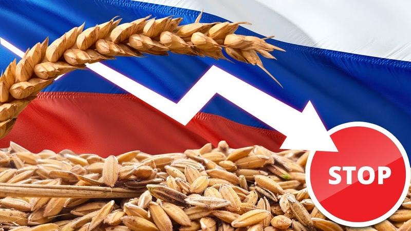 Российское продовольствие должно быть в Европе: в ЕС требуют снять запрет на экспорт