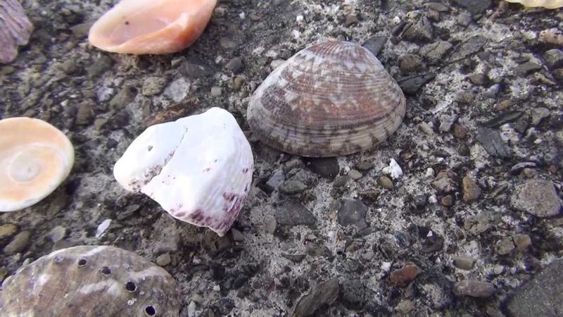 ビーチで貝殻拾いをするならみなべ店周辺がオススメ 和歌山釣太郎