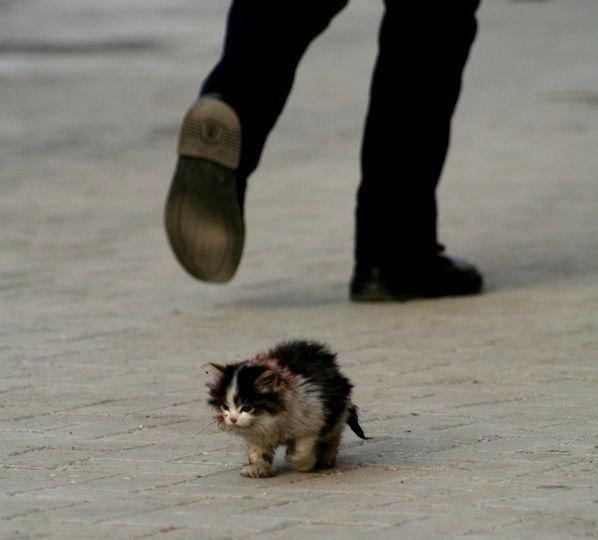 ступня грустные картинки бездомных животных до слез умеет