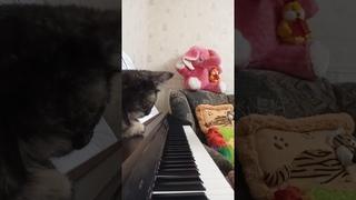 "Музыка Микаэла Таривердиева. Слова Николая Добронравова. ""Маленький принц""."